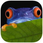 Critter match icon